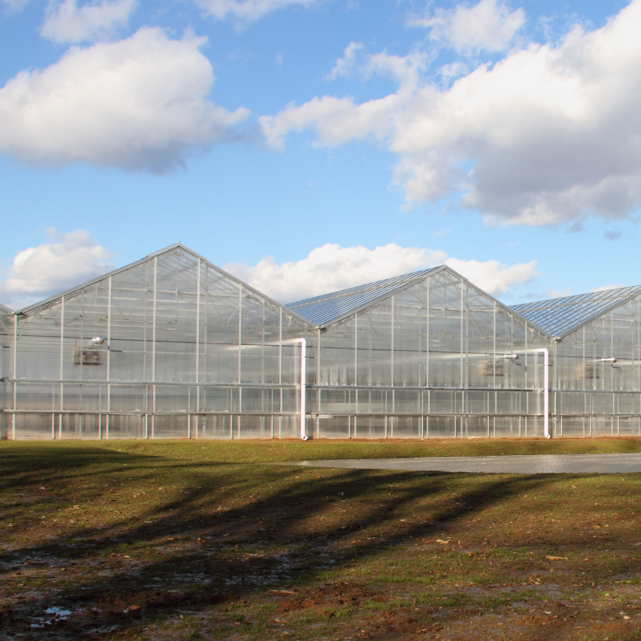 The BrightFarms greenhouse in Bucks County, Pa., supplies produce to a chain of supermarkets in Pennsylvania and New Jersey.