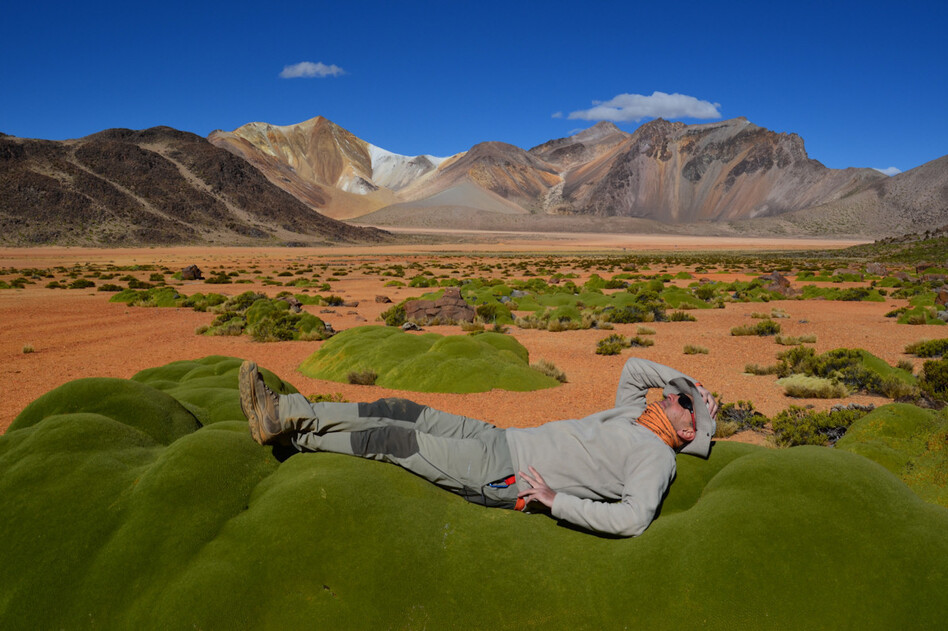 Kicking back in the Andes — with support of the local flora.
