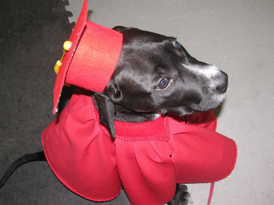 This dog went to a top-ten college...for dogs. (Martha T/Flickr)