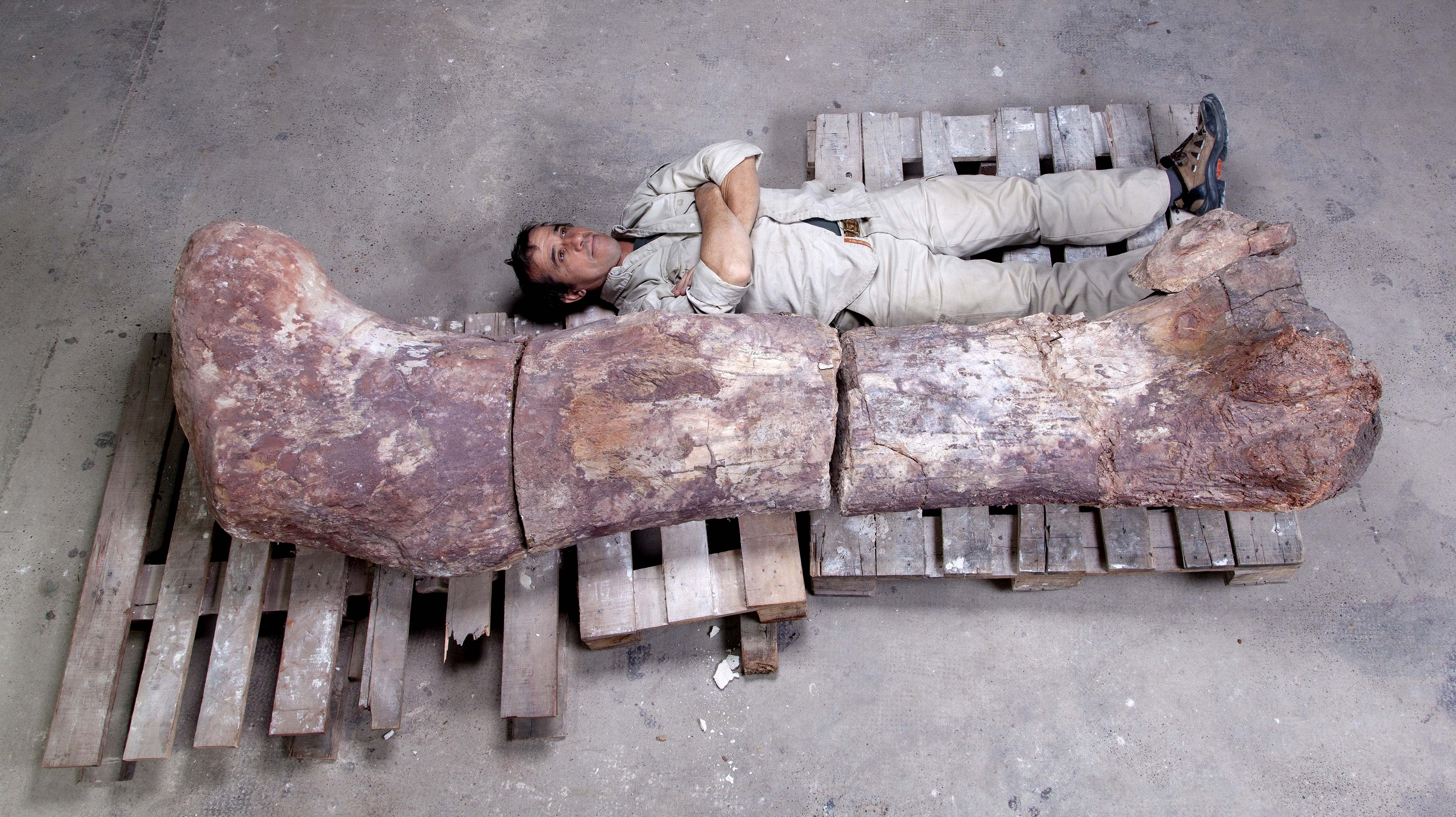 A Giant Among Dinosaurs, Discovered In Argentina