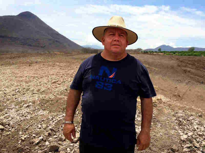 Farmer Efrain Hernandez Vazquez's profits this year will allow him to purchase 30 more acres and expand his lime operation.