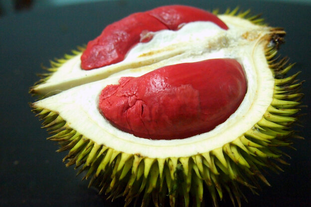 The inside of the Graveolens, a variety of durian that grows in the southernmost parts of Thailand, is sticky and cheese-like.