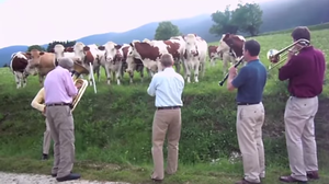 Cows in France listen to American jazz musicians play a tune.