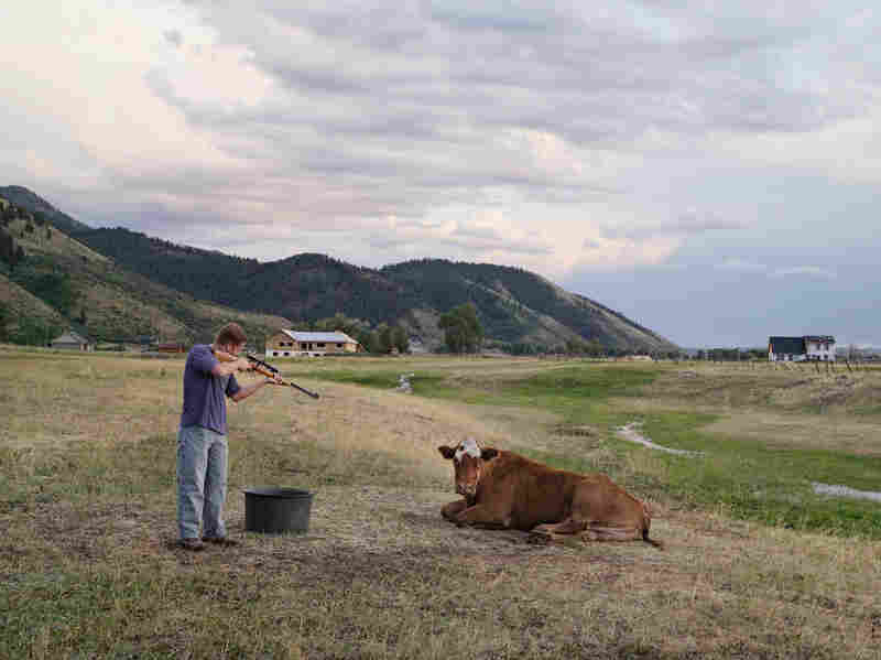 Adam Killing a Cow, Mortensen Family Farm, Afton, Wyoming 2010