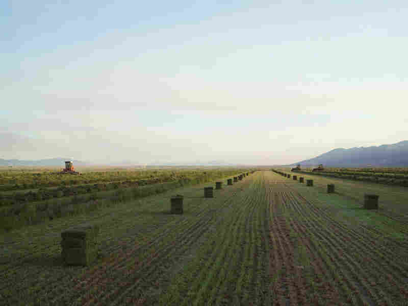 Baling Hay, Diamond Valley, Nevada 2012