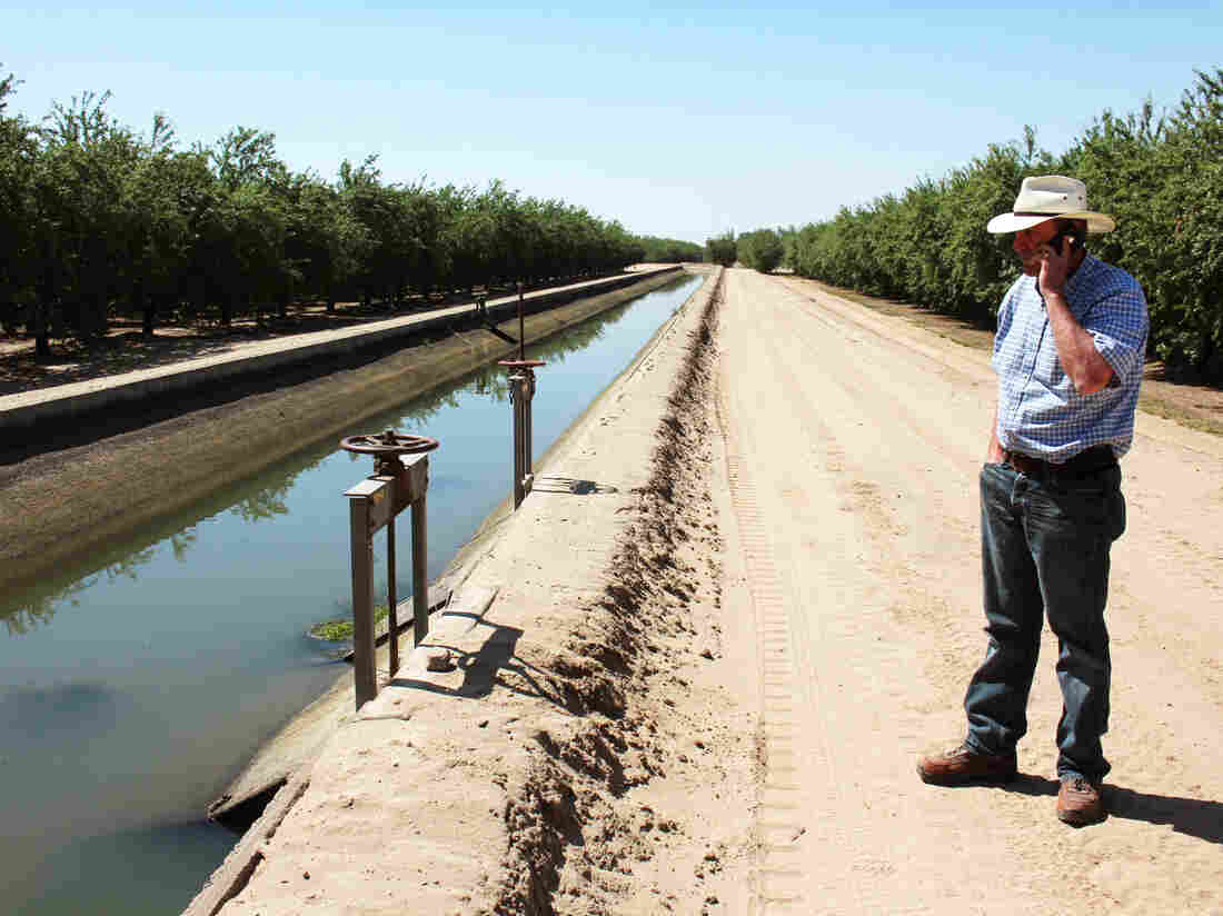 Allen Peterson's farm, near the city of Turlock, Calif., lies next to a concrete-lined canal full of water. He's one of the lucky ones.