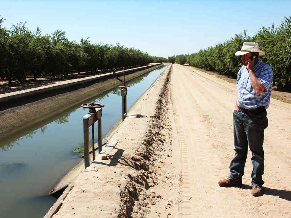 Allen Peterson's farm, near the city of Turlock, Calif., lies next to a concrete-lined canal full