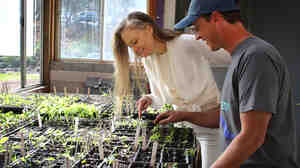 Suzy Amis Cameron, wife of director James Cameron, and gardener and educator Paul Hudak inspect seedlings in the MUSE School CA greenhouse in Calabasas, Calif. Amis Cameron, who founded the school with her sister, wants the school menu to be entirely plant-based by fall 2015.