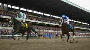 Why Is It So Hard For A Horse To Win The Triple Crown?