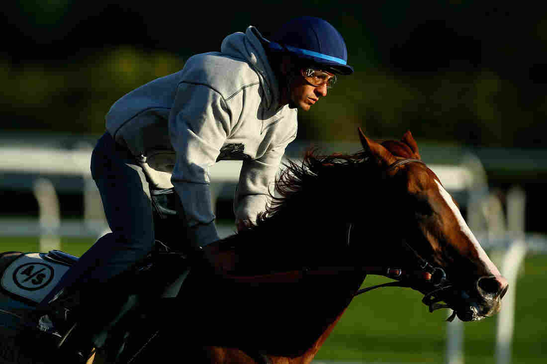 Even if California Chrome wins Saturday's Belmont Stakes, most Americans are too disconnected from horses to flock to the race track, says commentator Frank Deford.