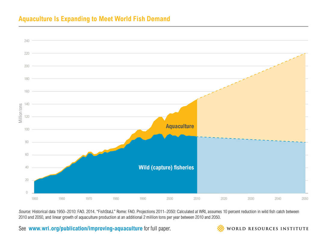Aquaculture will have to more than double by 2050 to meet the demand for seafood.