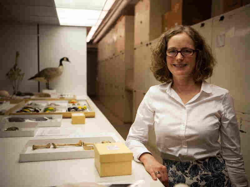 Helen James is the curator in charge of the birds at the museum.