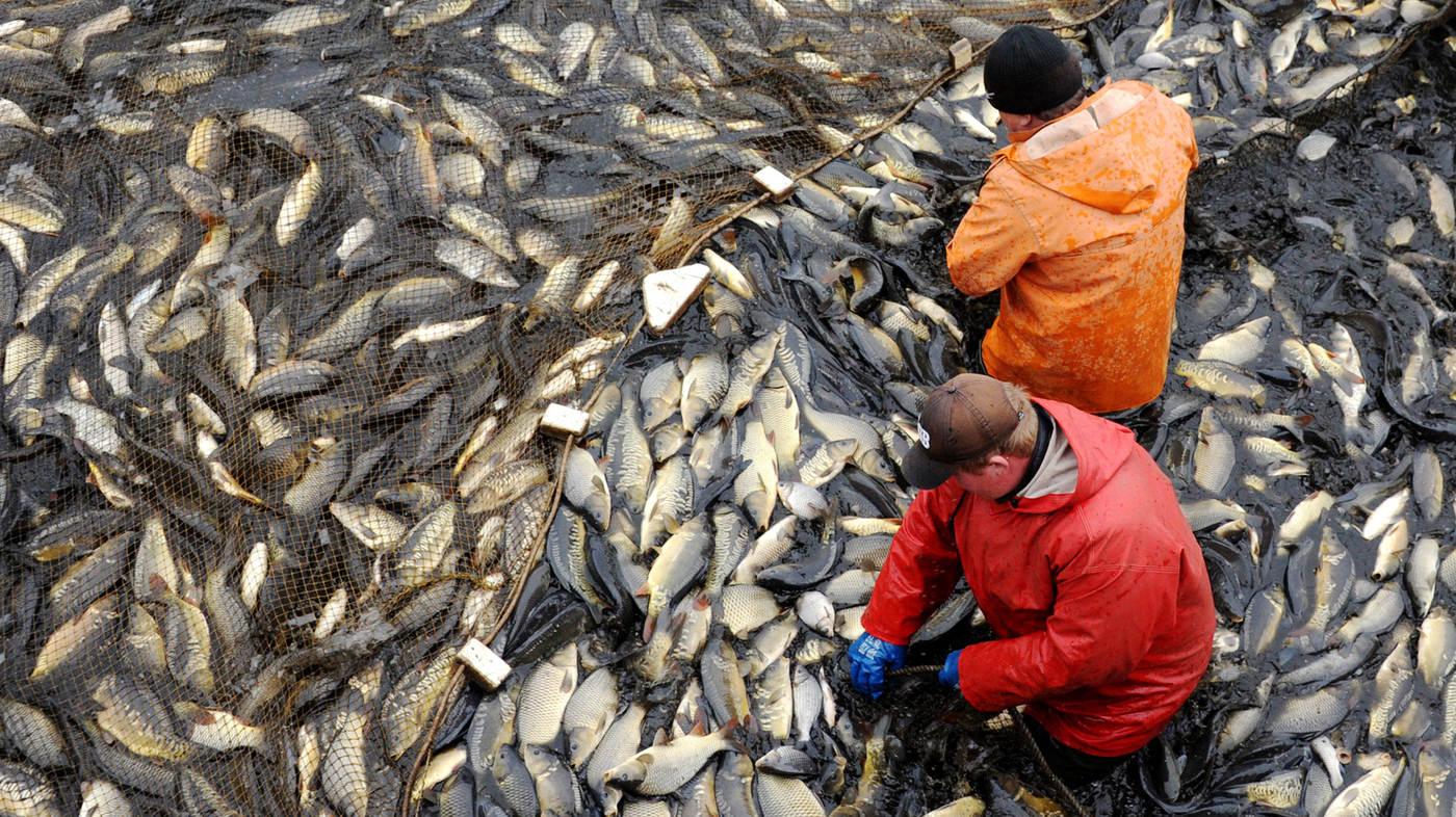 Can farmed fish feed the world without destroying the for What is fish farming