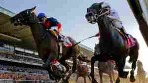 California Chrome Loses To Tonalist In Belmont, Misses Triple Crown