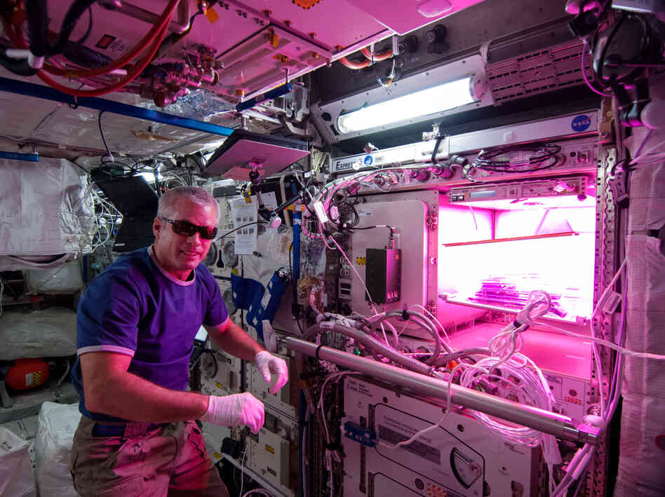 "Astronaut Steve ""Swanny"" Swanson tends to lettuce plants growing at the International Space Station that may one day make it into his salad."