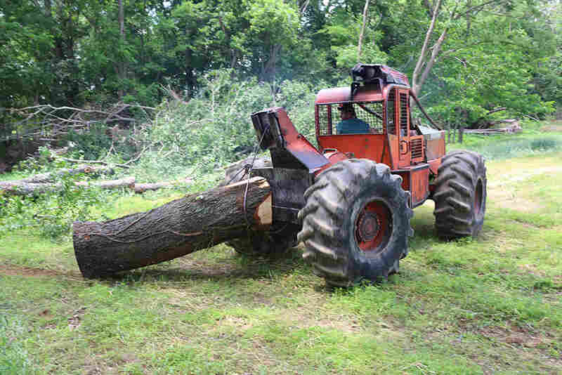 Justin Redfern drags a fallen tree out of the woods using a skidder. Logging is risky work; it accounted for more occupational deaths in the U.S. last year than any other industry.