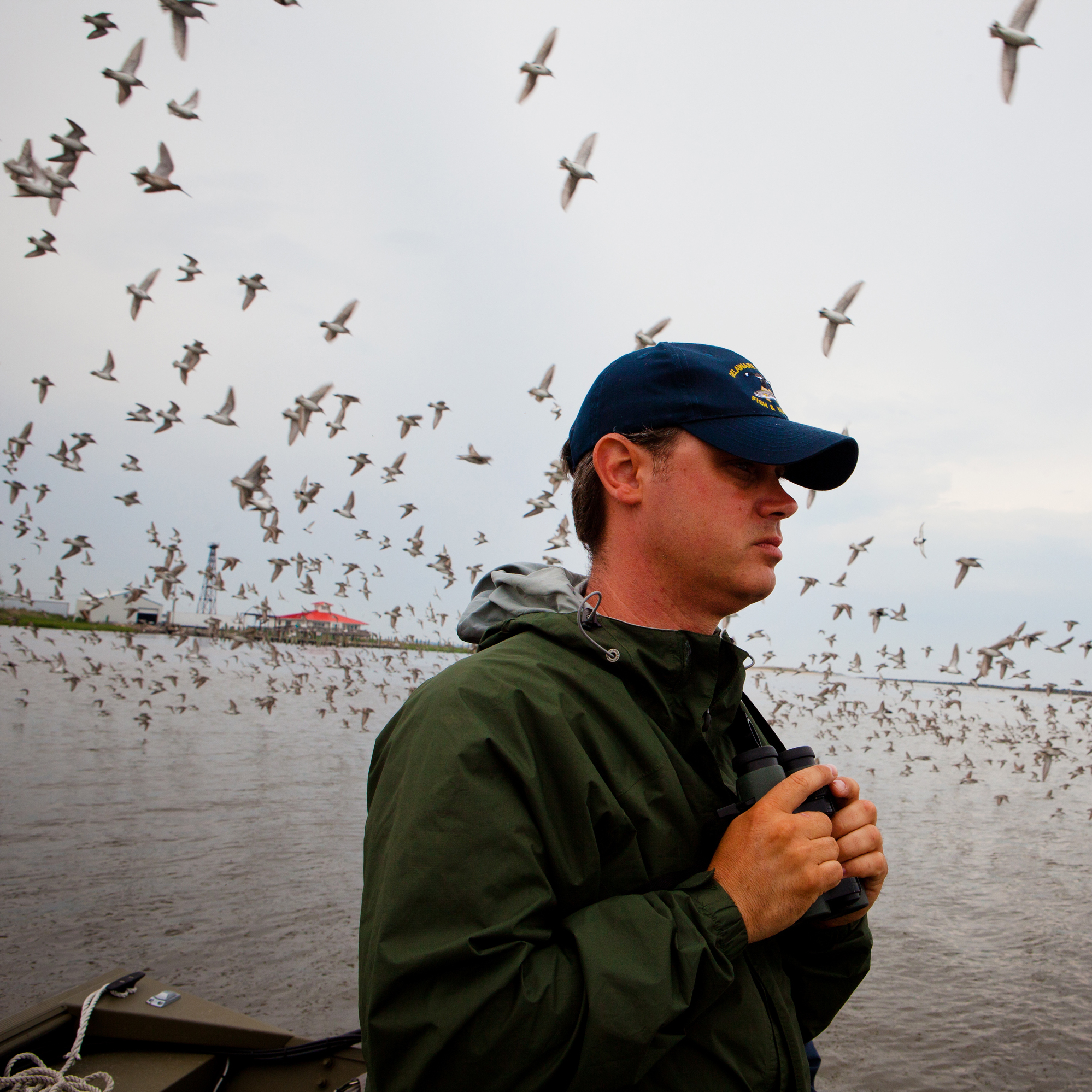 Kevin Kalasz, a biologist with the shorebird project, on the lookout for red knots amid the gulls and other birds.