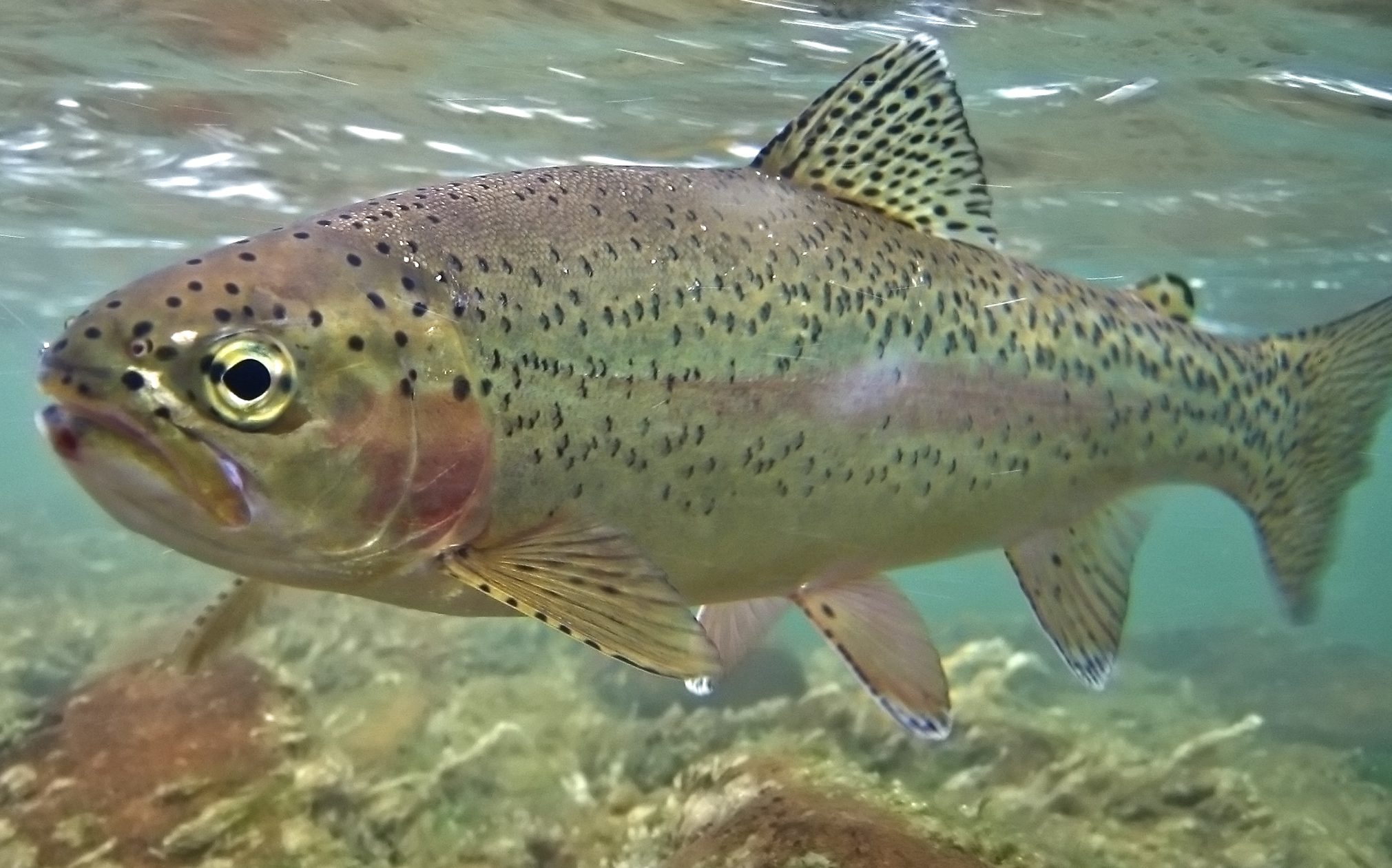 Are trout too smart to eat and other surprising questions for Are fish smart