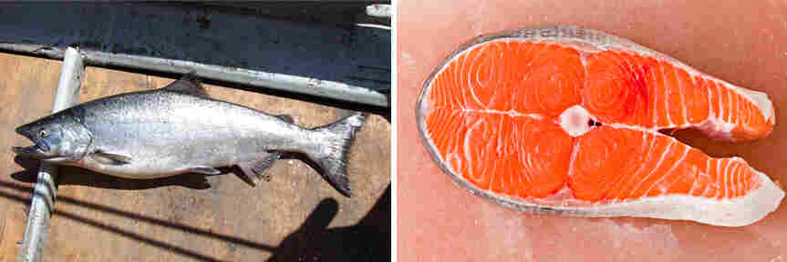 A Chinook salmon, location unknown; a Chinook salmon fillet.