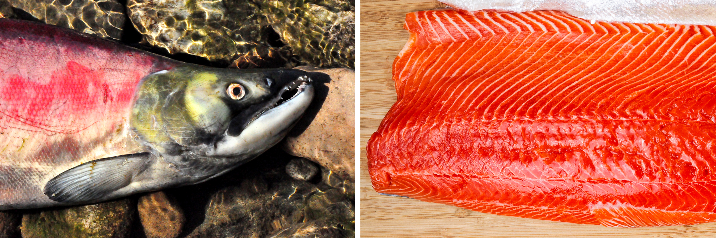A sockeye salmon, location unknown; a sockeye salmon steak.