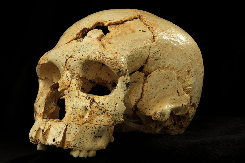 """By comparing """"Skull 17"""" from the Sima de los Huesos site with many others found in the same cave, researchers were able to discern the common facial features of the era. (Javier Trueba /Madrid Scientific Films)"""