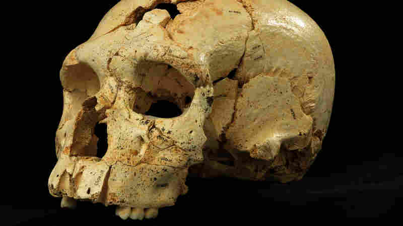 """By comparing """"Skull 17"""" from the Sima de los Huesos site with many others found in the same cave, researchers were able to discern the common facial features of the era."""