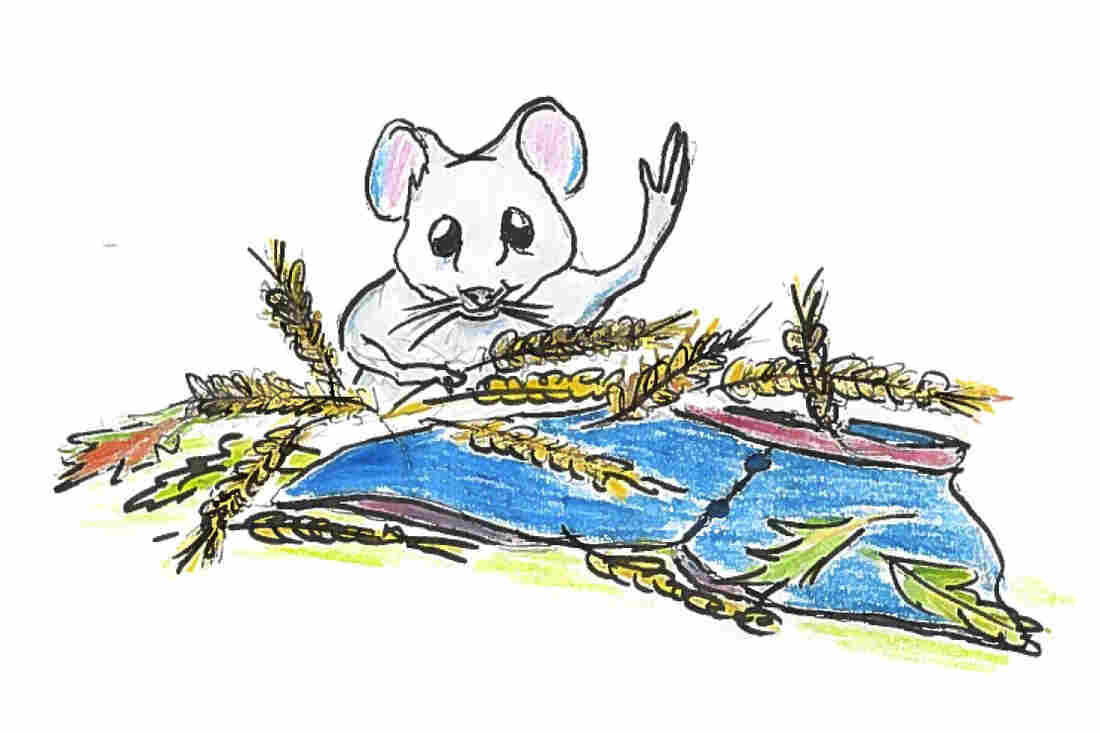 Mouse emerging from wheat.