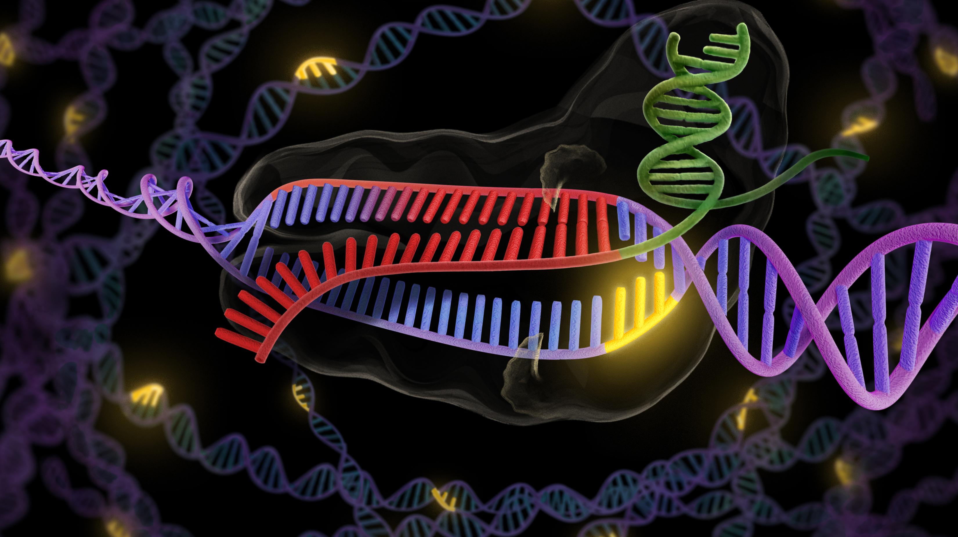 A CRISPR Way To Fix Faulty Genes
