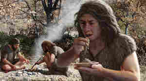 Did Neanderthals Eat Plants? The Proof May Be In The Poop