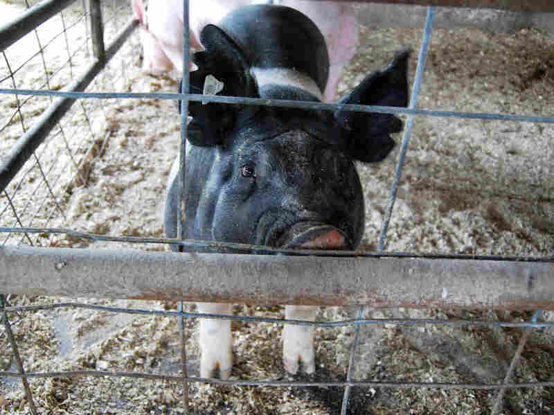 At Clayton Stephens' farm, he's implemented biosecurity measures to try to keep the disease away from his hogs.