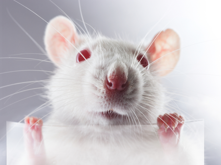 Lab Rats, One And All: That Unsettling Facebook Experiment