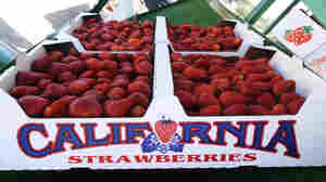 Breeding Battle Threatens Key Source Of California Strawberries