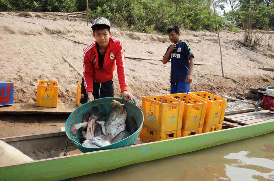 Nearly everyone fishes for a living on Laos' Don Sadam Island, near the site of the controversial Don Sahang dam. Locals and environmentalists alike are worried about the dam's effects on fish migration.