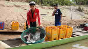 Damming The Mekong River: Economic Boon Or Environmental Mistake?