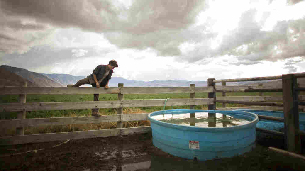 On Calif. Cattle Ranch, Students Wrangle With Meaning Of Manhood