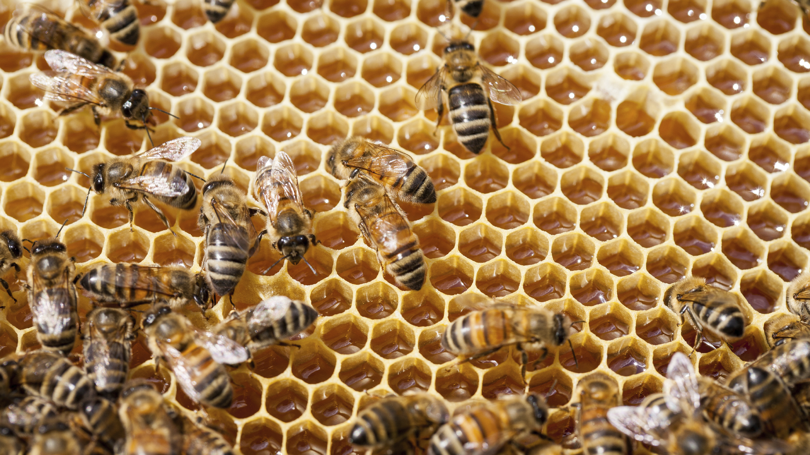 Biologist Says Promoting Diversity Is Key To 'Keeping The Bees'