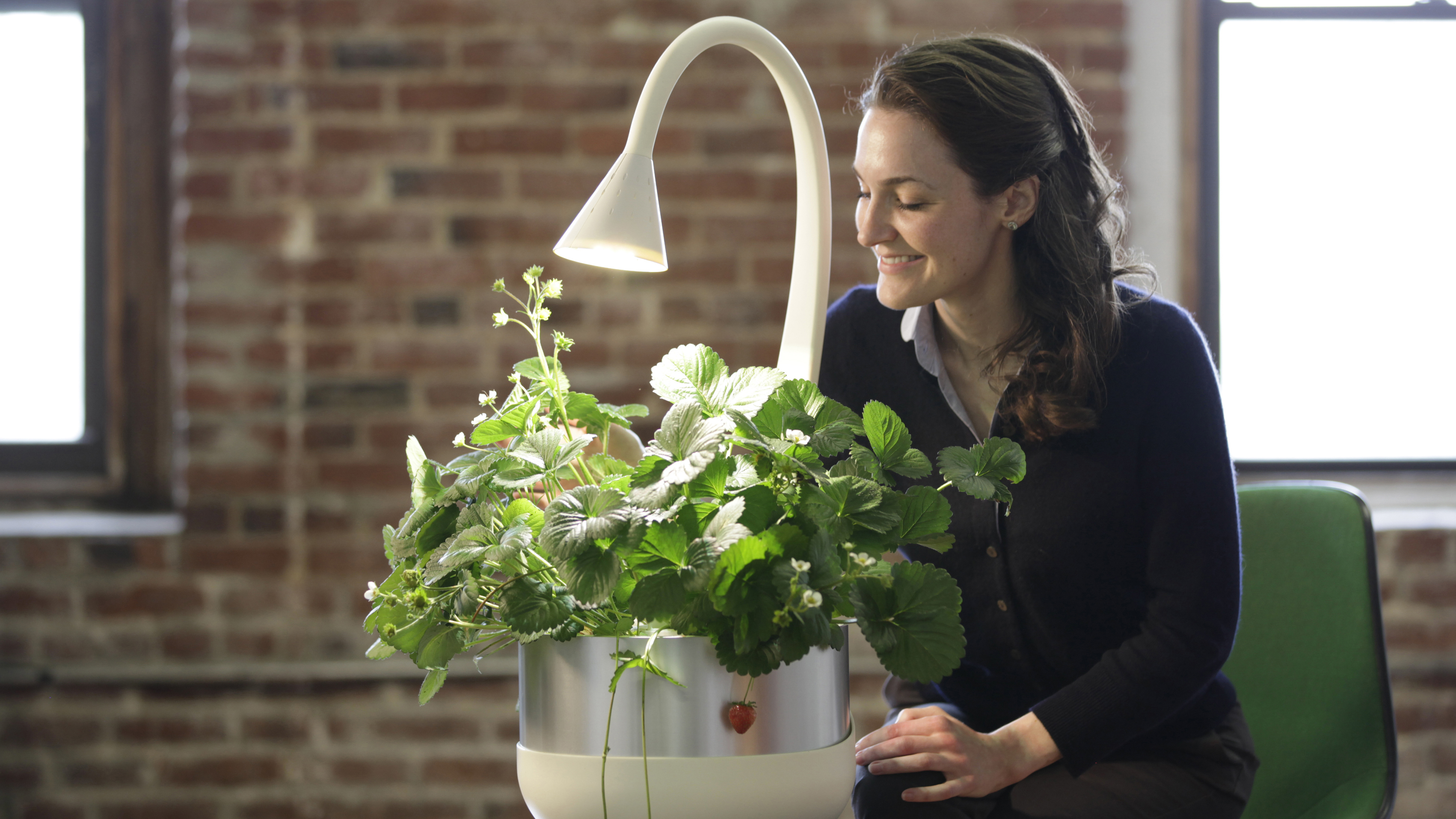 A User-Friendly Gardening System For The Plant-Challenged