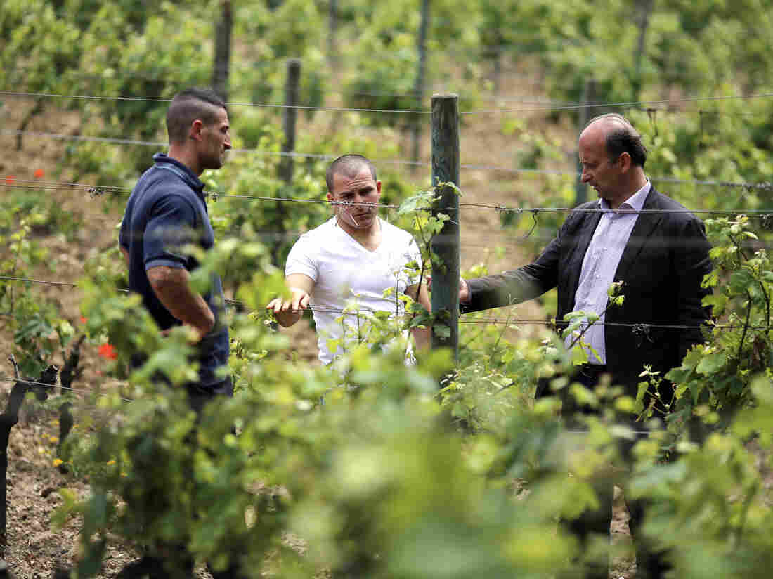 Marquise Lamberto Frescobaldi (right), of the winemaking dynasty, talks with prisoners Brian Baldissin (left) and Francesco Papa at his vineyard
