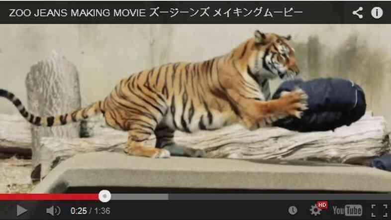 "Zoo Jeans being ""designed"" by a tiger."