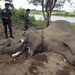 Elephant Featured In Film 'Alexander' Killed By Thai Poachers