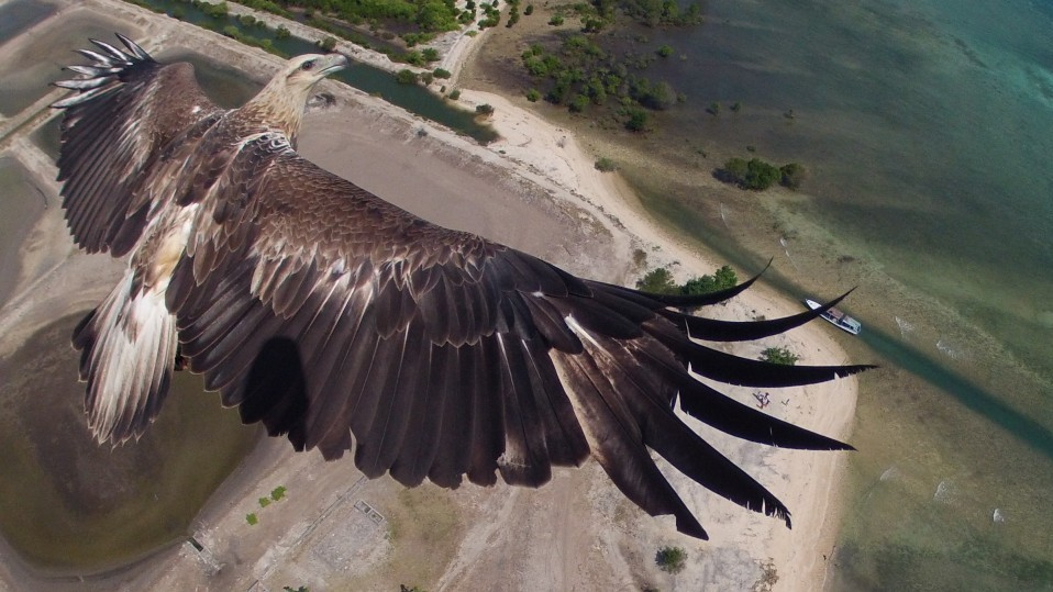 Fly Like An Eagle: Site Picks The Best Aerial Drone Photos