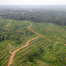 Spread Of Palm Oil Production Into Africa Threatens Great Apes