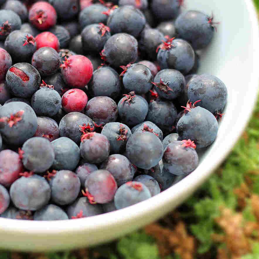 Saskawhat? A Novel Berry Takes Root On Michigan Farms