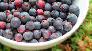 Saskawhat? A Novel Berry Takes Root On Michigan Farms
