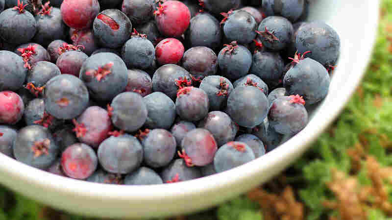 The saskatoon looks like a blueberry. But the shrub is more closely related to an apple tree.