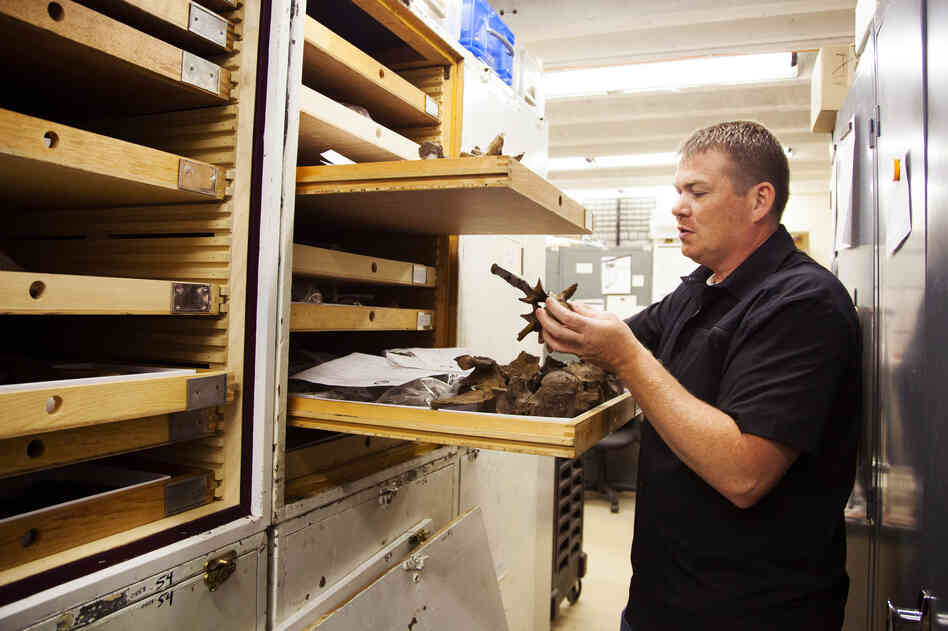 Amateur paleontologist and beer lover Jason Osborne organizes fossils in the basement lab of the Calvert Marine Museum in Solomons, Md., last month.
