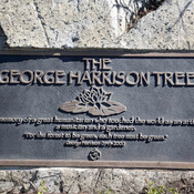 A tree planted in Los Angeles to honor former Beatle George Harrison grew to more than 12 feet tall before succumbing to a bark beetle infestation