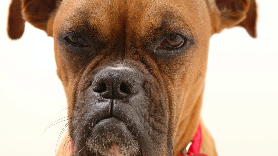 Can Dogs Feel Human Emotions