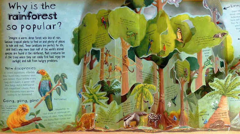 Why is the rainforest so popular?