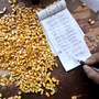 When China Spurns GMO Corn Imports, American Farmers Lose Billions